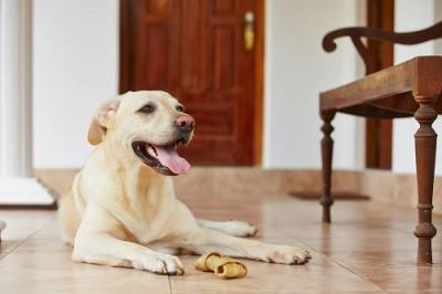 ペットと暮らす注文住宅を建てる